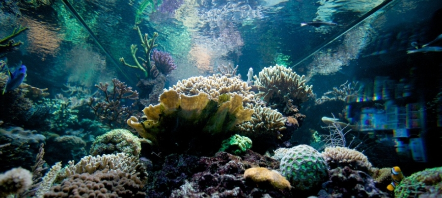 Morska Akvaristika Aquavala Vitejte Ve Svete Morske Akvaristiky